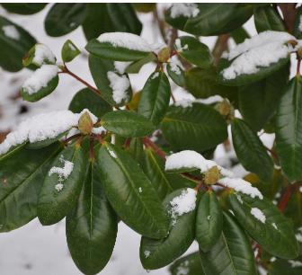 rhodosneeuwbladerennetopen
